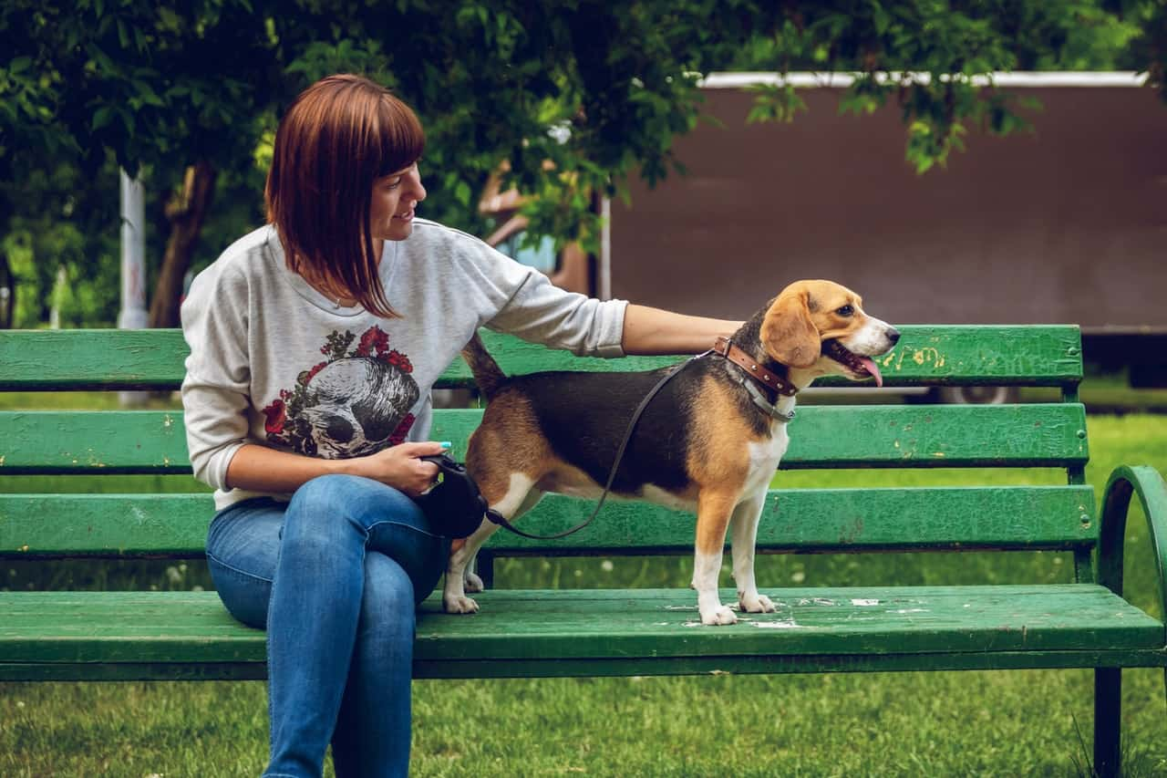 work from home pet sitting jobs